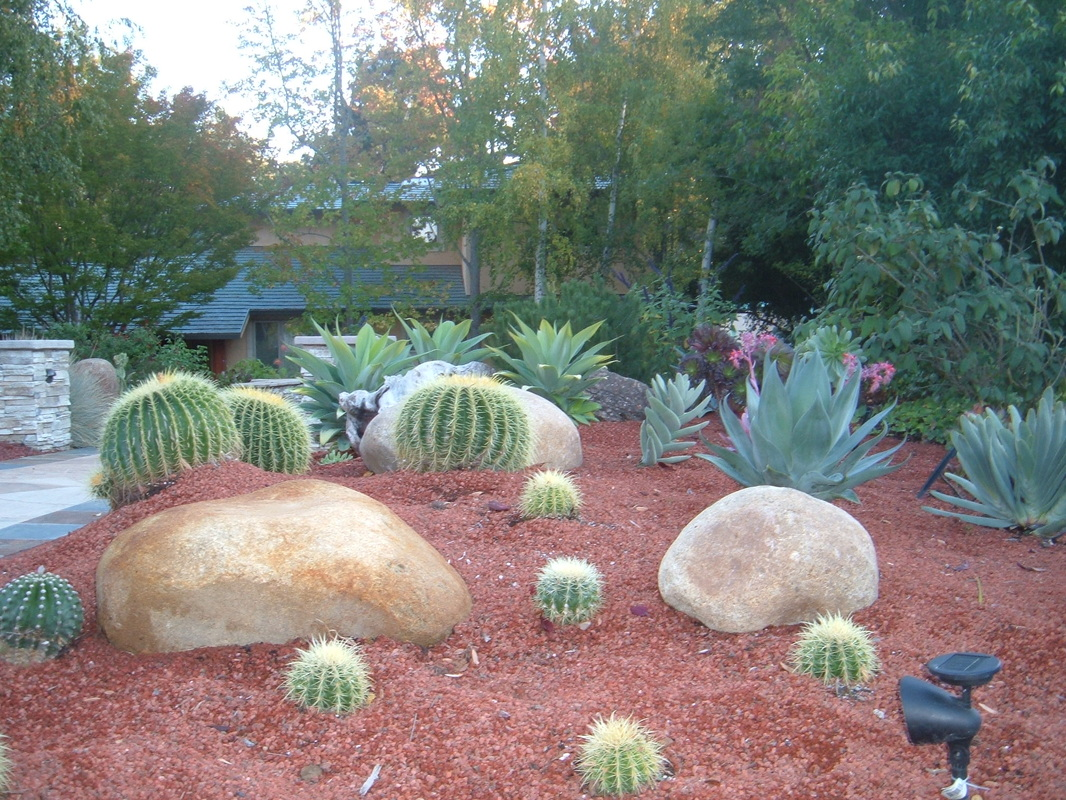 Front view of landscape with xeriscape.