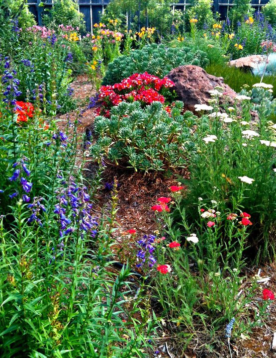 Colorful low water usage garden.