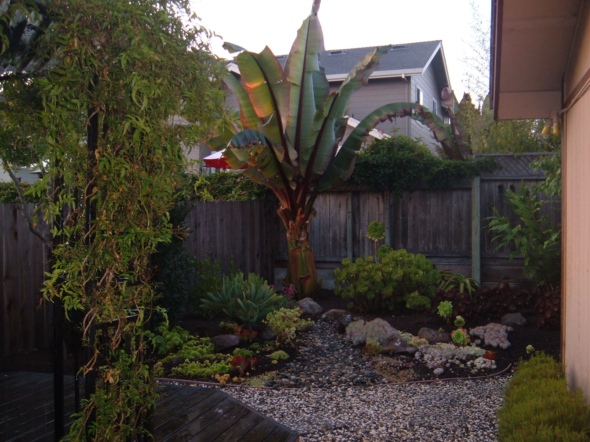 Back yard transformed with new landscaping.