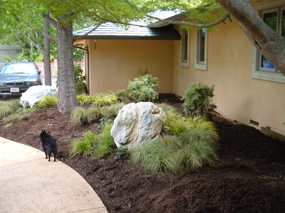 Home in Saratoga, Ca with landscaping transformed with a boulder surrounded by Carex commasm Acrous gramineus an Pieris Japonica plants in fresh soil.