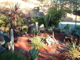 Lawn replaced with xeriscape landscaping.
