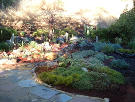 Xeriscape landscape after featuring cacti and succulents.